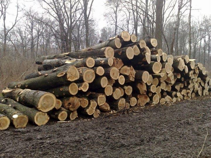 high quality European spruce logs